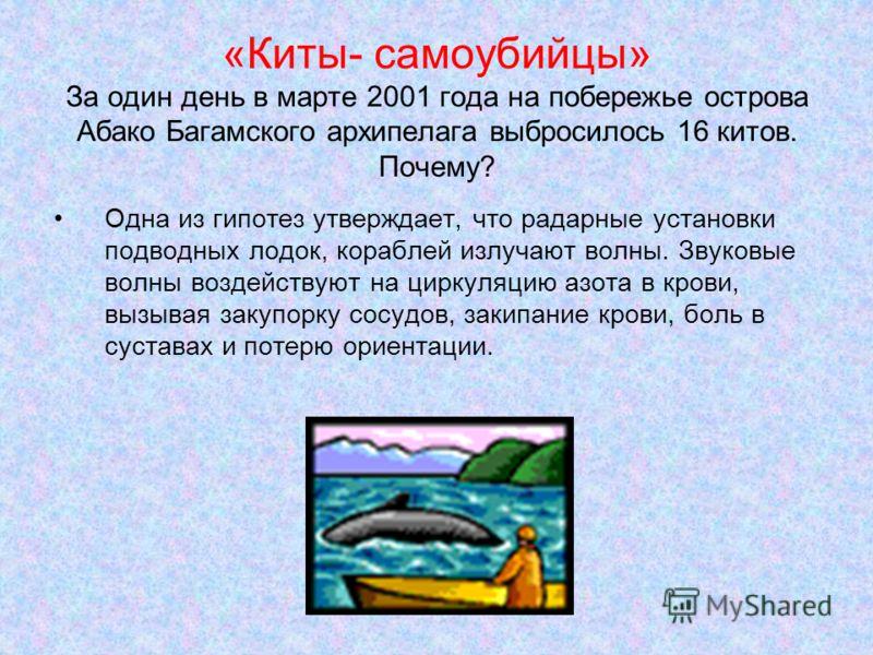 «Киты- самоубийцы» За один день в марте 2001 года на побережье острова Абако Багамского архипелага выбросилось 16 китов. Почему? Одна из гипотез утверждает, что радарные установки подводных лодок, кораблей излучают волны. Звуковые волны воздействуют