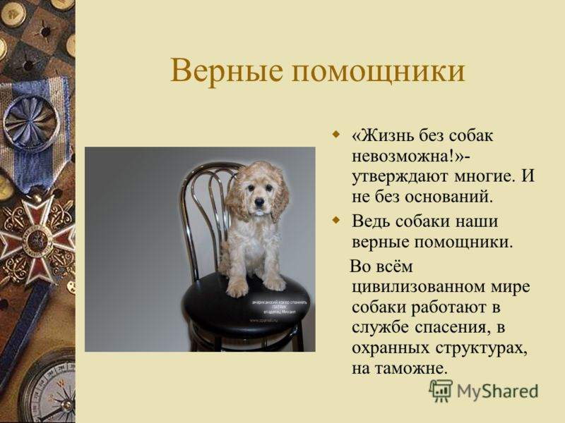 Верные помощники «Жизнь без собак невозможна!»- утверждают многие. И не без оснований. Ведь собаки наши верные помощники. Во всём цивилизованном мире собаки работают в службе спасения, в охранных структурах, на таможне.