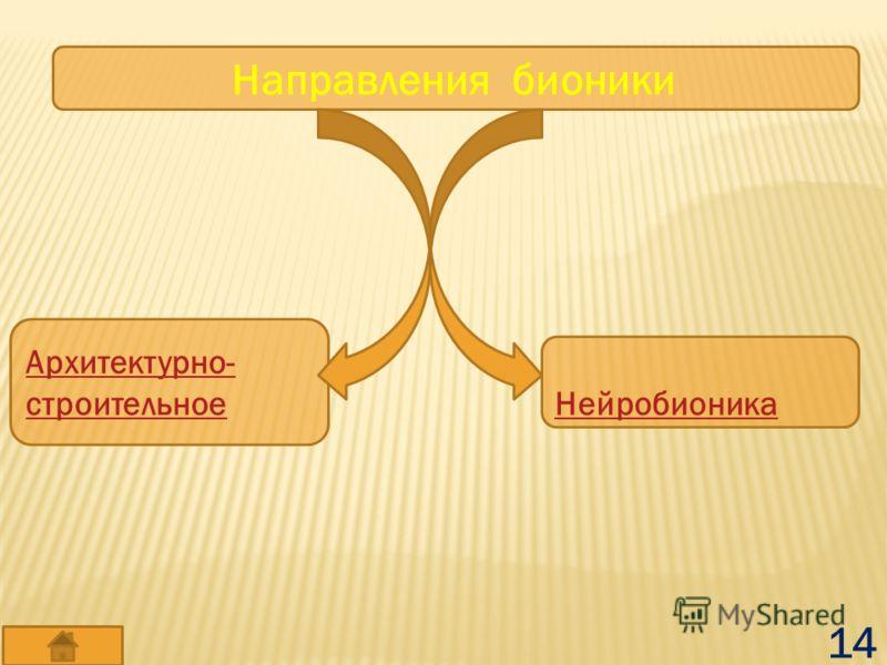 Направления бионики Архитектурно- строительное Нейробионика 14