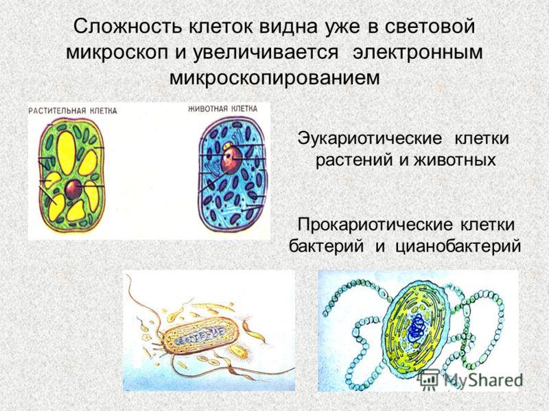 Сложность клеток видна уже в световой микроскоп и увеличивается электронным микроскопированием Эукариотические клетки растений и животных Прокариотические клетки бактерийи цианобактерий
