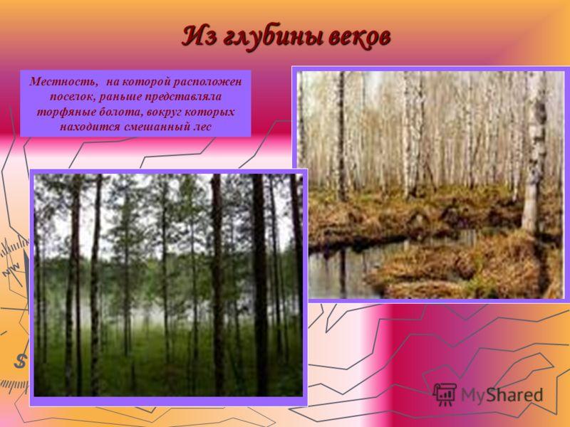 Из глубины веков Местность, на которой расположен поселок, раньше представляла торфяные болота, вокруг которых находится смешанный лес