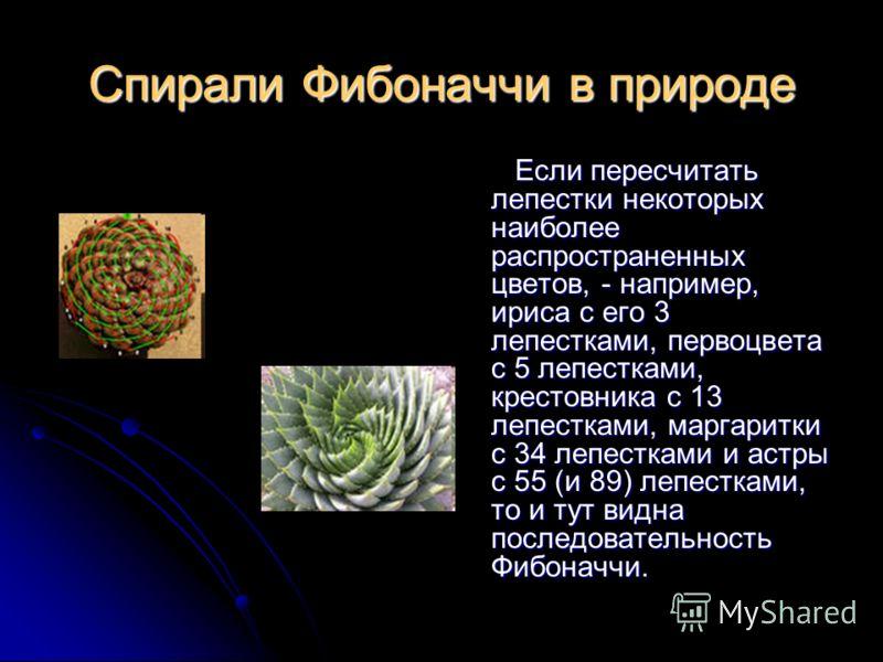 Спирали Фибоначчи в природе Если пересчитать лепестки некоторых наиболее распространенных цветов, - например, ириса с его 3 лепестками, первоцвета с 5 лепестками, крестовника с 13 лепестками, маргаритки с 34 лепестками и астры с 55 (и 89) лепестками,