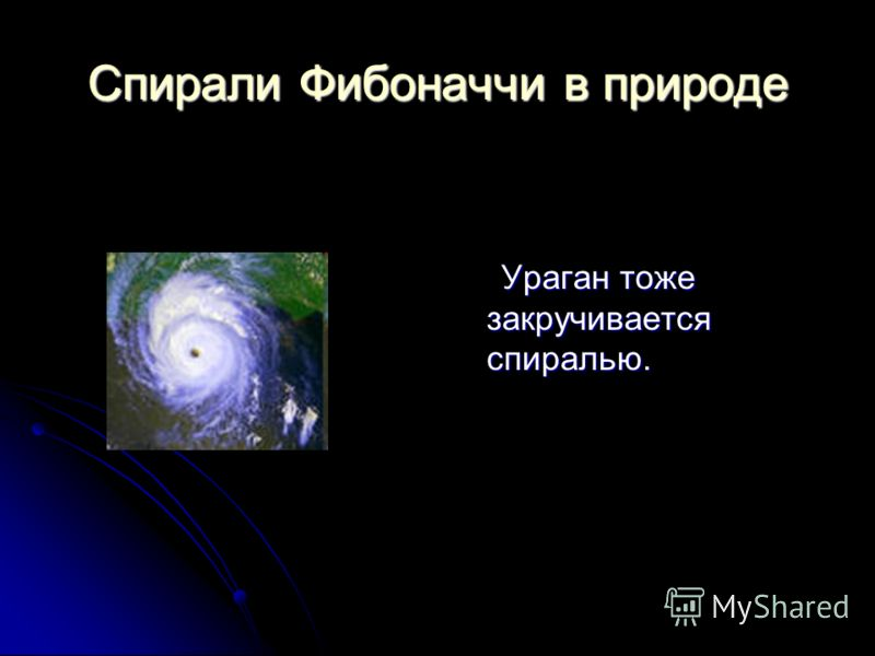 Спирали Фибоначчи в природе Ураган тоже закручивается спиралью. Ураган тоже закручивается спиралью.