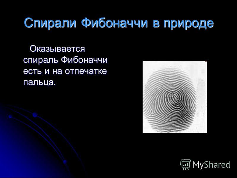 Спирали Фибоначчи в природе Оказывается спираль Фибоначчи есть и на отпечатке пальца. Оказывается спираль Фибоначчи есть и на отпечатке пальца.