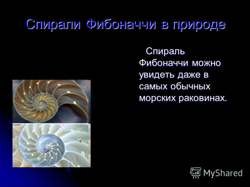 Спирали Фибоначчи в природе Спираль Фибоначчи можно увидеть даже в самых обычных морских раковинах. Спираль Фибоначчи можно увидеть даже в самых обычных морских раковинах.