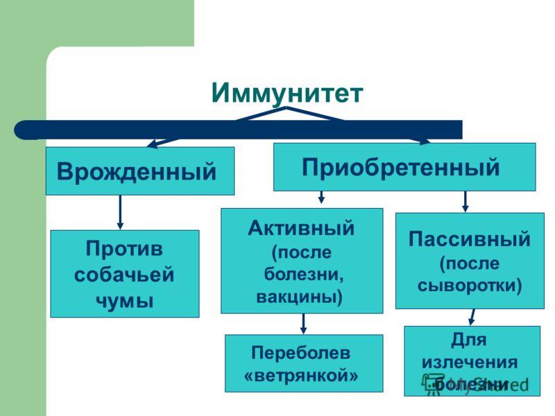 Иммунитет Врожденный Приобретенный Активный (после болезни, вакцины) Пассивный (после сыворотки) Против собачьей чумы Переболев «ветрянкой» Для излечения болезни
