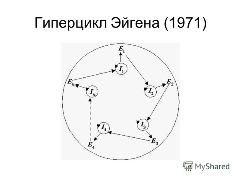 Гиперцикл Эйгена (1971)