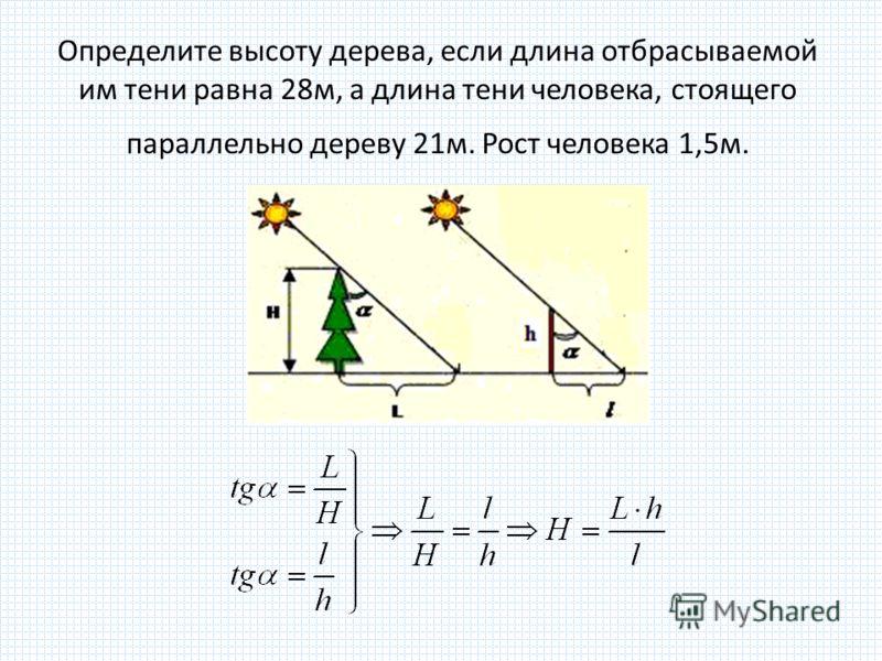 Определите высоту дерева, если длина отбрасываемой им тени равна 28м, а длина тени человека, стоящего параллельно дереву 21м. Рост человека 1,5м.