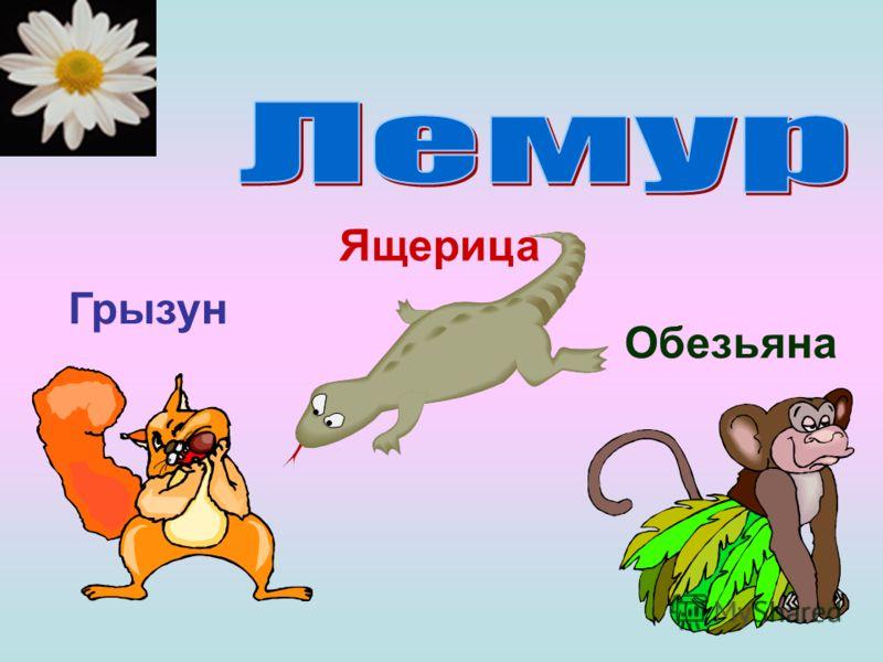 Грызун Ящерица Обезьяна