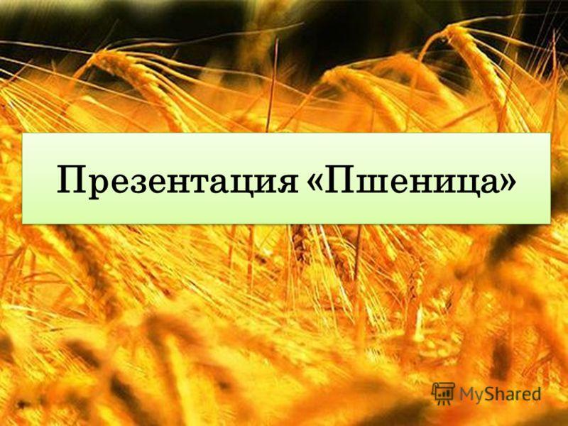 Презентация «Пшеница»