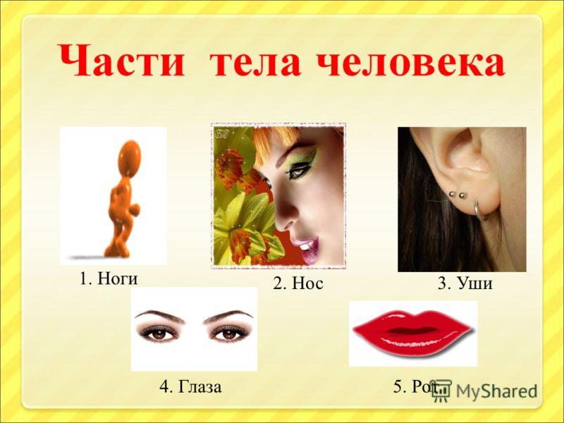 1. Ноги 2. Нос3. Уши 4. Глаза5. Рот