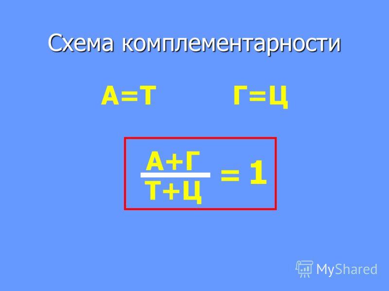 Схема комплементарности А=Т Г=Ц А+Г Т+Ц = 1