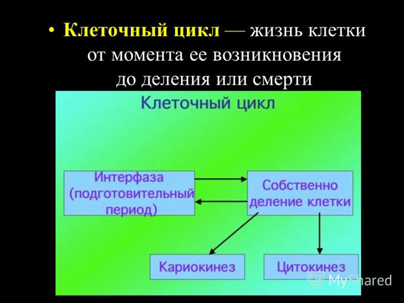 Клеточный цикл жизнь клетки от момента ее возникновения до деления или смерти