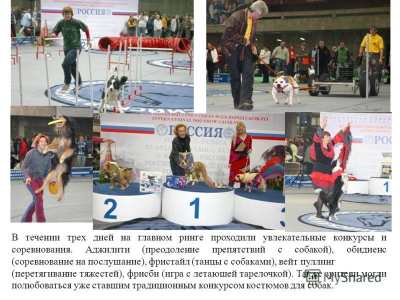 В течении трех дней на главном ринге проходили увлекательные конкурсы и соревнования. Аджилити (преодоление препятствий с собакой), обидиенс (соревнование на послушание), фристайл (танцы с собаками), вейт пуллинг (перетягивание тяжестей), фрисби (игр