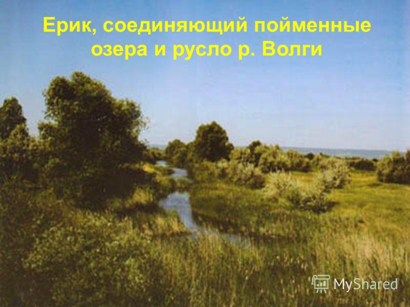 Ерик, соединяющий пойменные озера и русло р. Волги