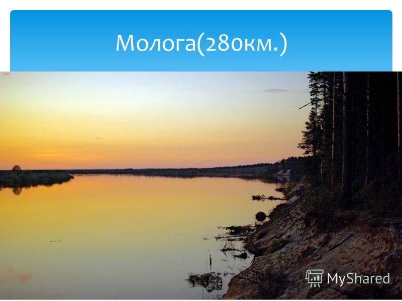 Молога(280км.)