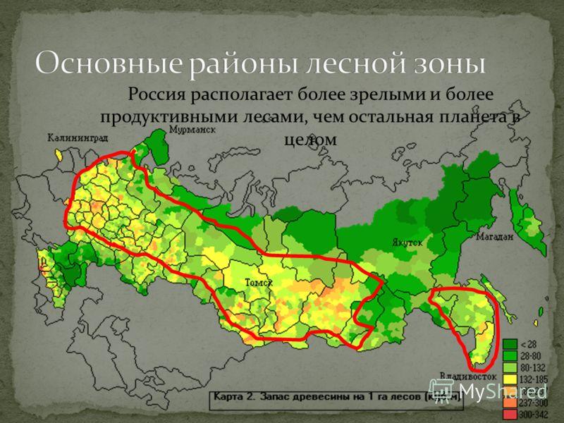 Россия располагает более зрелыми и более продуктивными лесами, чем остальная планета в целом