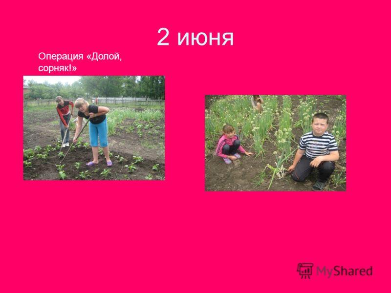 2 июня Операция «Долой, сорняк!»