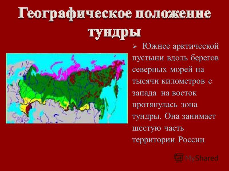 Южнее арктической пустыни вдоль берегов северных морей на тысячи километров с запада на восток протянулась зона тундры. Она занимает шестую часть территории России.
