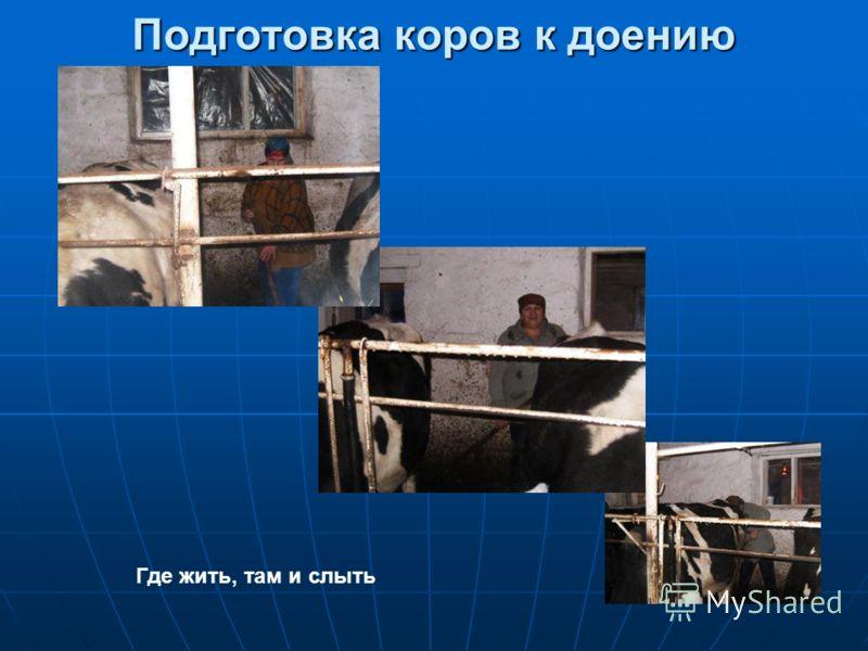 Подготовка коров к доению Где жить, там и слыть