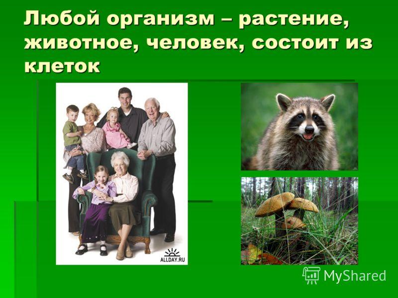 Любой организм – растение, животное, человек, состоит из клеток