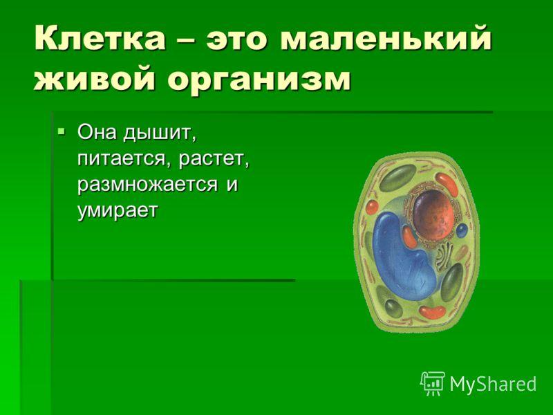Клетка – это маленький живой организм Она дышит, питается, растет, размножается и умирает Она дышит, питается, растет, размножается и умирает