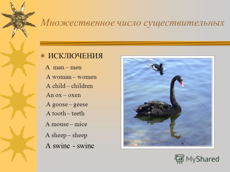 Множественное число существительных ИСКЛЮЧЕНИЯ A man – men A woman – women A child – children An ox – oxen A goose – geese A tooth – teeth A mouse – mice A sheep – sheep A swine - swine
