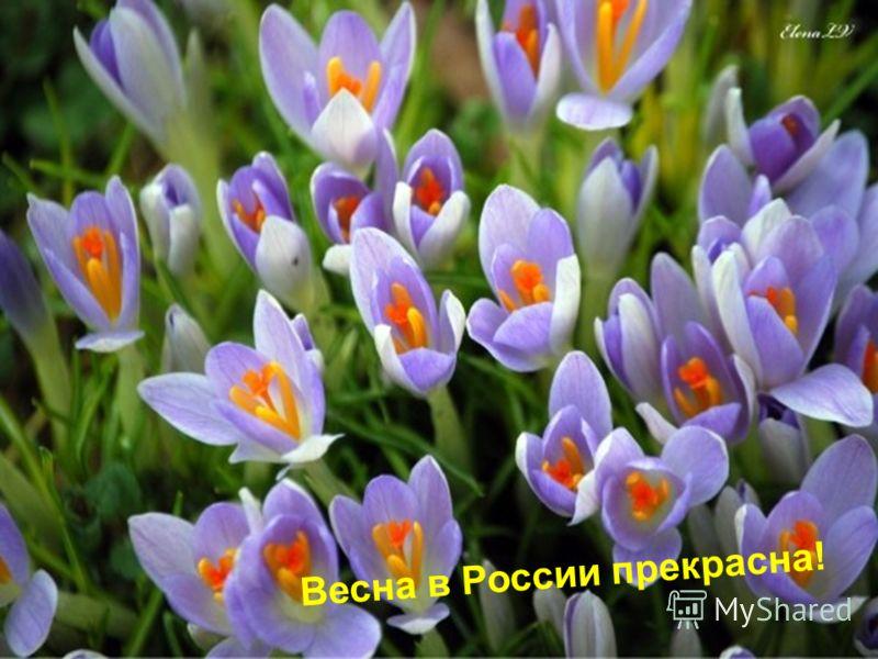 Весна в России прекрасна!