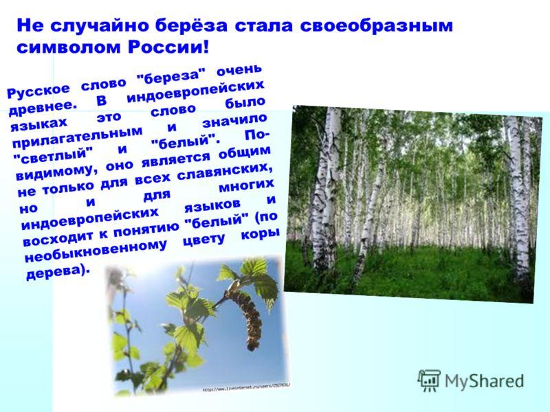 Не случайно берёза стала своеобразным символом России! Русское слово