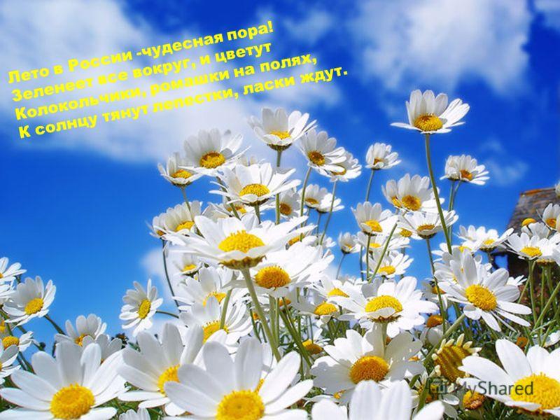 Лето в России -чудесная пора! Зеленеет все вокруг, и цветут Колокольчики, ромашки на полях, К солнцу тянут лепестки, ласки ждут.