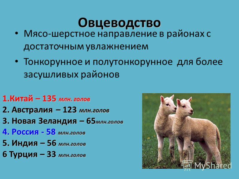 В мире (около 1 млрд. голов) мясошерстного направления характерно для районов с достаточным увлажнением и относительно мягким климатом, тонкорунного и полутонкоруднного направления – для более засушливых районов. Страны- лидеры по поголовью овец: Кит