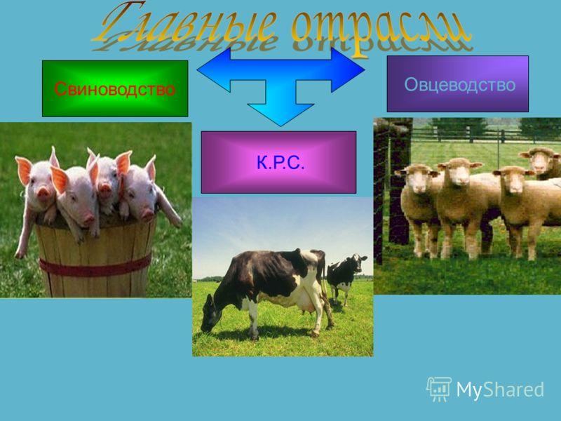 Животноводство растениеводством Животноводство вторая главная отрасль мирового сельского хозяйства, сравнимая по значению с растениеводством, а во многих странах и регионах превосходящая его. В структуре этой отрасли принято выделять несколько подотр