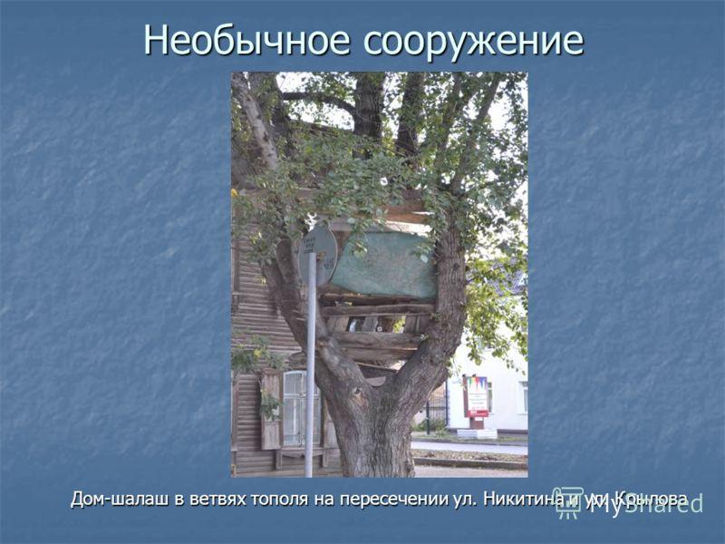 Необычное сооружение Дом-шалаш в ветвях тополя на пересечении ул. Никитина и ул. Крылова