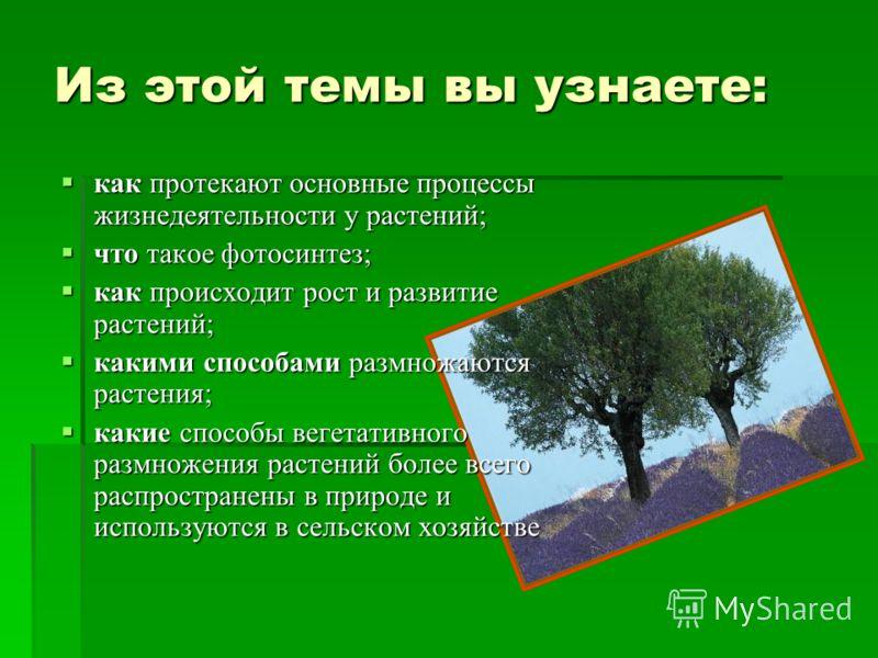 Из этой темы вы узнаете: как протекают основные процессы жизнедеятельности у растений; как протекают основные процессы жизнедеятельности у растений; что такое фотосинтез; что такое фотосинтез; как происходит рост и развитие растений; как происходит р