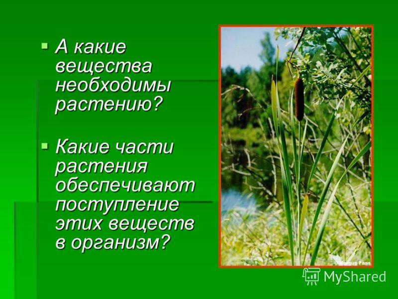А какие вещества необходимы растению? А какие вещества необходимы растению? Какие части растения обеспечивают поступление этих веществ в организм? Какие части растения обеспечивают поступление этих веществ в организм?