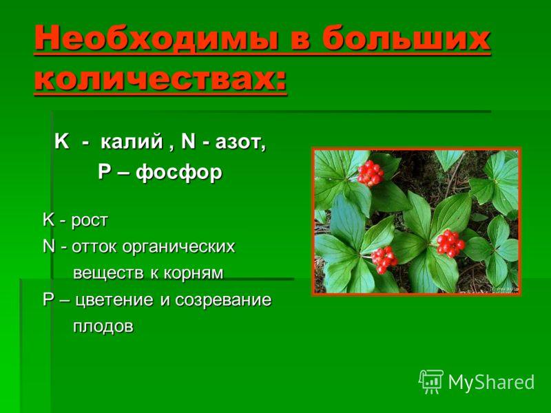 Необходимы в больших количествах: K - калий, N - азот, P – фосфор K - рост N - отток органических веществ к корням P – цветение и созревание плодов