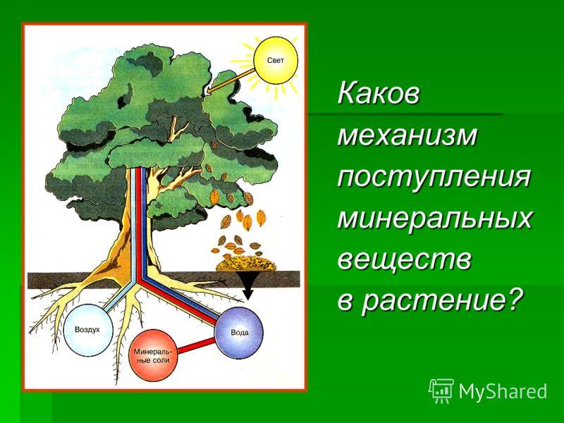 Каковмеханизмпоступленияминеральныхвеществ в растение?