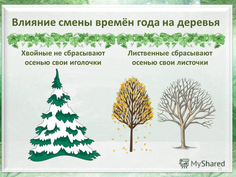 Влияние смены времён года на деревья Хвойные не сбрасывают осенью свои иголочки Лиственные сбрасывают осенью свои листочки 11
