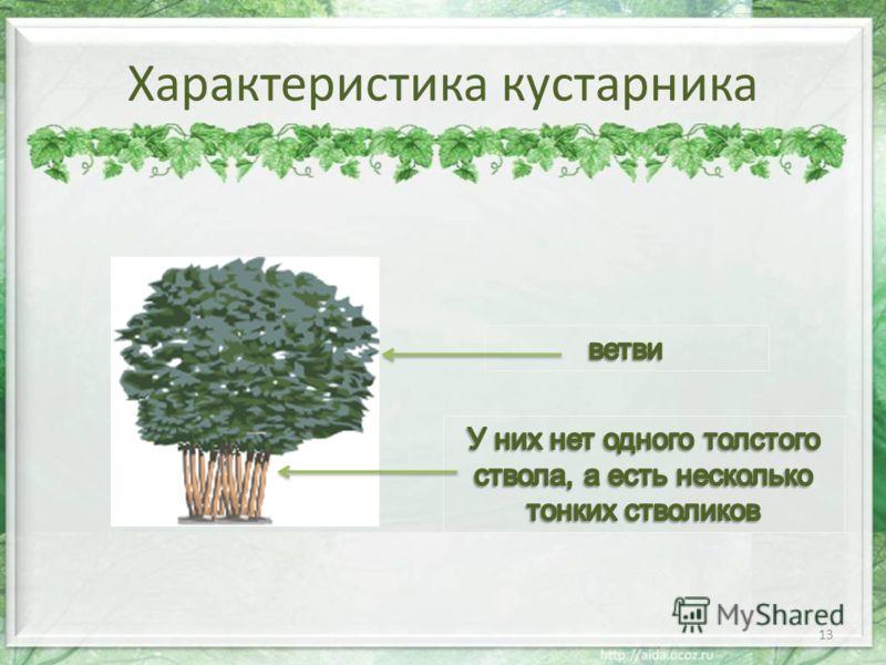 Характеристика кустарника 13