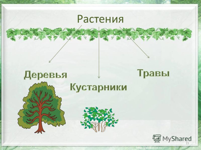 Растения 16 слайд 17 травы о в к к п а п о