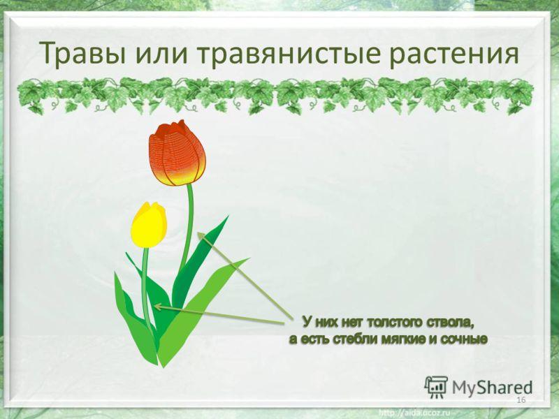 Травы или травянистые растения 16