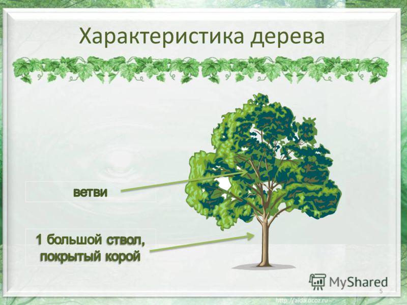 Характеристика дерева 5