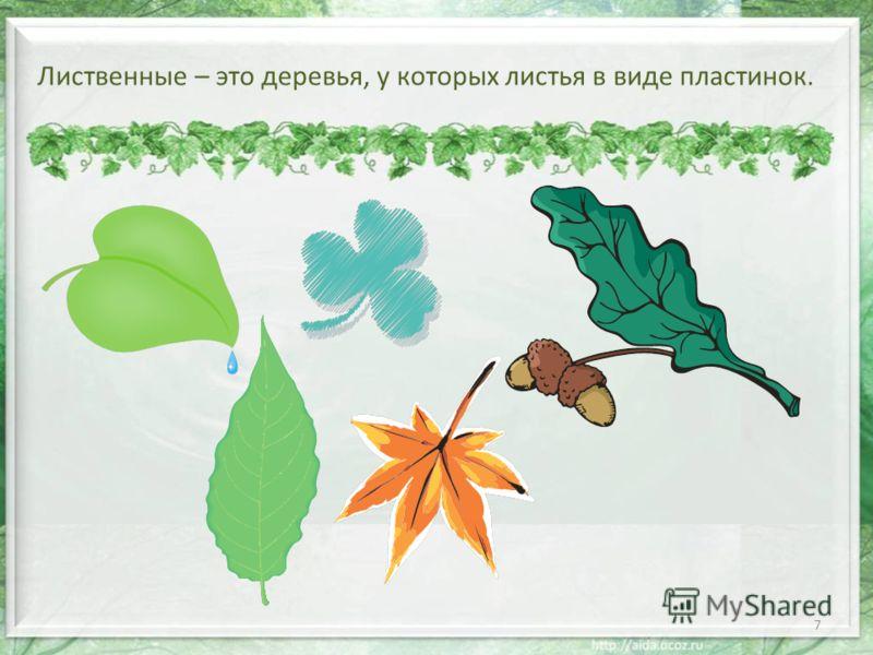 Лиственные – это деревья, у которых листья в виде пластинок. 7