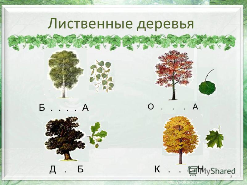 8 Лиственные деревья Д. Б О... А К... Н Б.... А