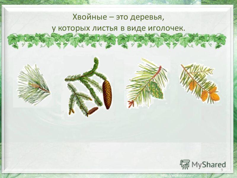 Хвойные – это деревья, у которых листья в виде иголочек. 9