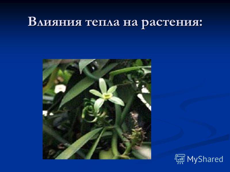 Влияния тепла на растения: