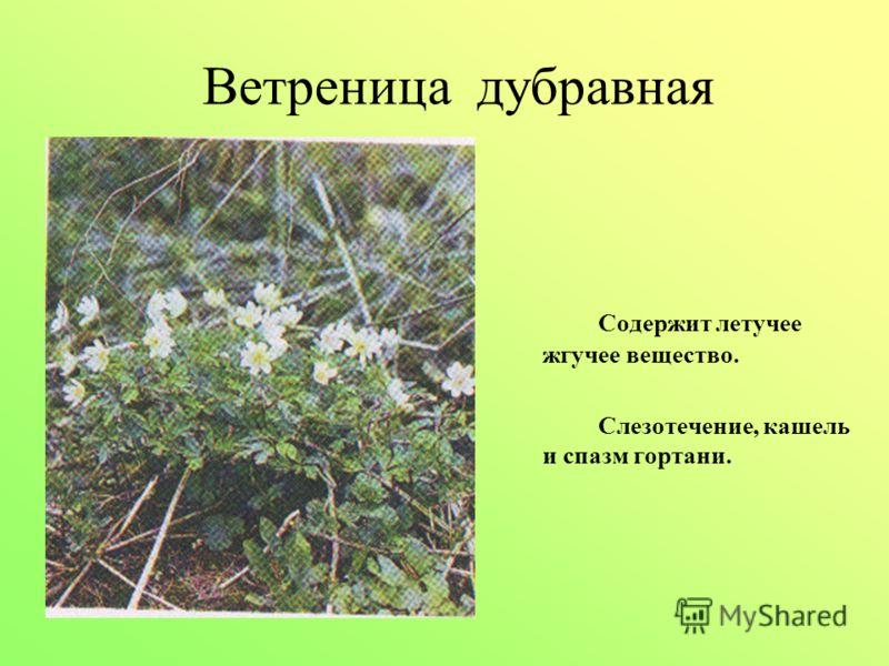 Ветреница дубравная Содержит летучее жгучее вещество. Слезотечение, кашель и спазм гортани.