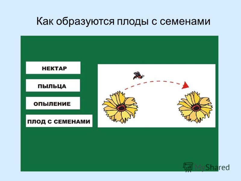 Как образуются плоды с семенами