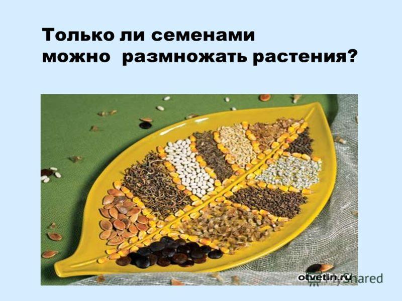 Только ли семенами можно размножать растения?