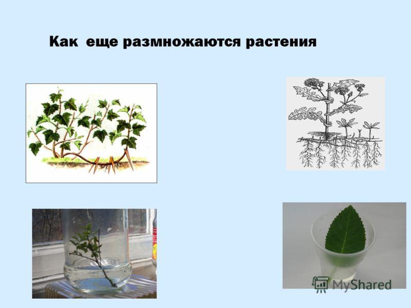 Как еще размножаются растения